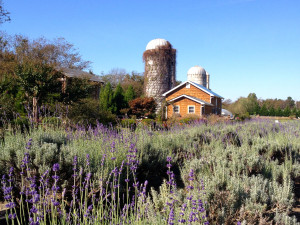 Lavender Fields Farm 1