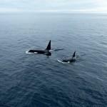 Whale Watching in Seward, Alaska