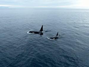 Orca 2