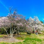 Spring at the National Arboretum