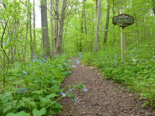 Bucks County- New Hope- Bowman's Hill Wildflower Preserve 1