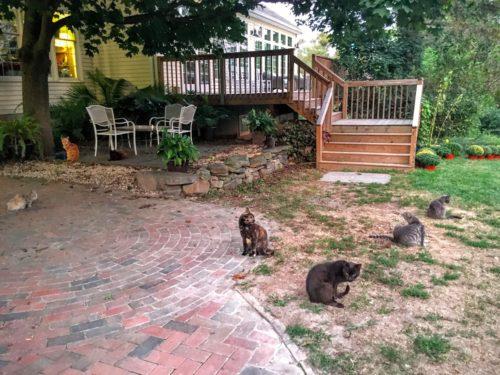 gettysburg-getaway-battlefield-bb-cats