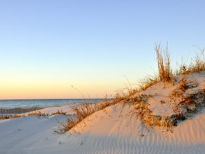 Cape Charles- dunes