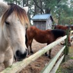 3 Things to Do in Chincoteague This Fall